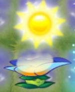 Moonflower 75 sun