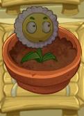 Screenshot daisy