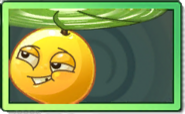 Doublesamara Uncommon Seed Packet