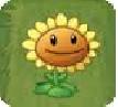 Sunflower pvz 2