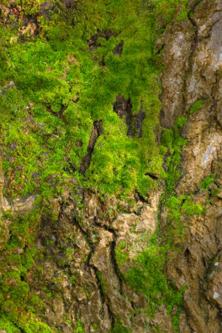 File:Mossy Trunk Habitat.png