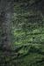 Mossy Habitat