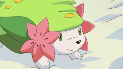 800px-Shaymin M11 Land Forme-1-