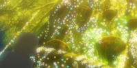 XY059: Under the Pledging Tree!