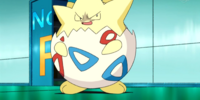 Togepi (DP142)