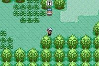 Ruby-Sapphire Route 102 1