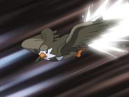 Ash Staravia Quick Attack