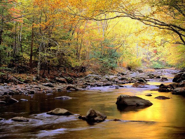 File:Golden-river-wallpaper.jpg