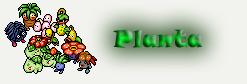 File:Planta.jpg