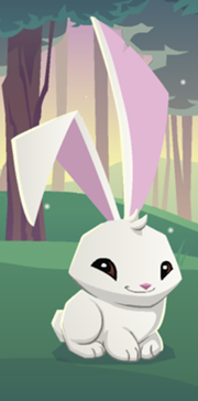 Mxcp180px-Bunny