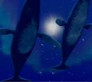 Baby Whale's Parents