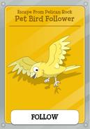 Pet Bird Follower