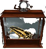 File:Harlequin-toad-lrg.png