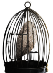 Hedwig b3c22m2