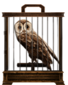 Tawny-owl-lrg.png