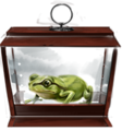 Western-green-toad-lrg.png