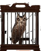 Screech-owl-lrg