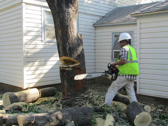 File:DFW Tree Removal.jpeg