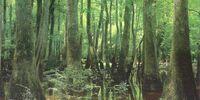 Wetland Adaptation