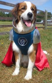 File:Capt-Canine.jpg