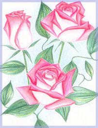 Roses by angstypoet