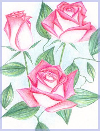 File:Roses by angstypoet.jpg