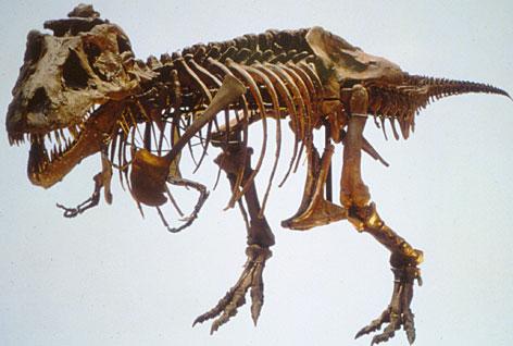 File:Fossilurl.jpg