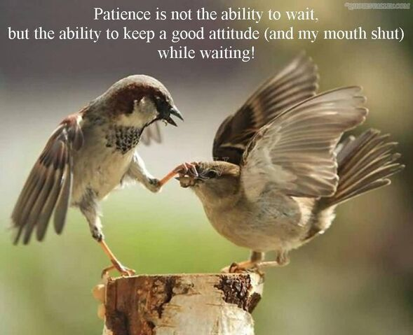 File:Patience-is-not-the-ability-to-wait.jpg