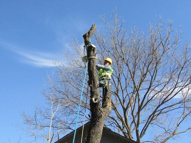 File:Dallas Tree Service - Dallas Tree Removal - 214- 556-5079 - DFW Tree Removal.jpeg