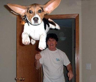 File:Flying Dog.jpg