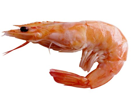 File:Going to be a Fairy Prawn.jpg