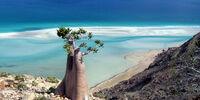 Socotra Skirmish