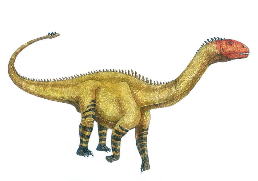 Картинки по запросу Шунозавр
