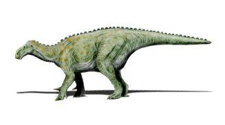 Iguanodon NT