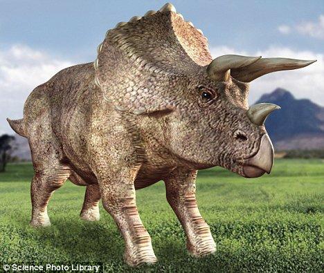File:Triceratops.jpg