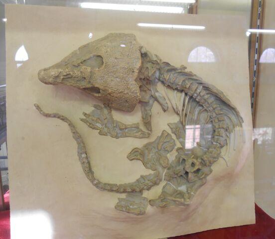 File:Labidosaurus RUGM.jpg