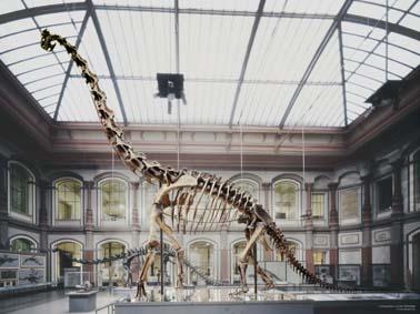 File:Berlin Naturkundemuseum Brachiosaurus henningsphoto de-1-.jpg