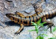 How-to-look-after-lizards