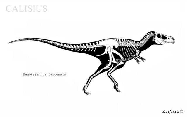File:Nanotyrannus skeletal rec by Calisius-1-.jpg