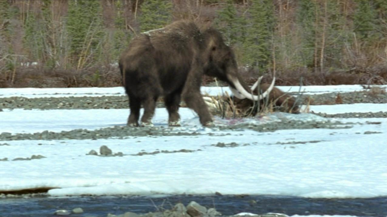 Woolly mammoth | Prehistoric Park Wiki | FANDOM powered by ...