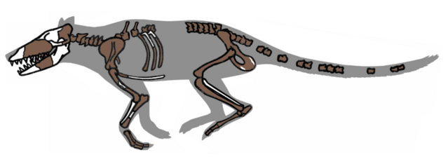 File:800px-Pakicetus fossil.png
