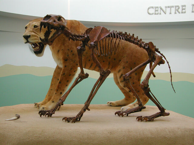 File:Homotherium.jpg