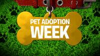 Pet Adoption Week