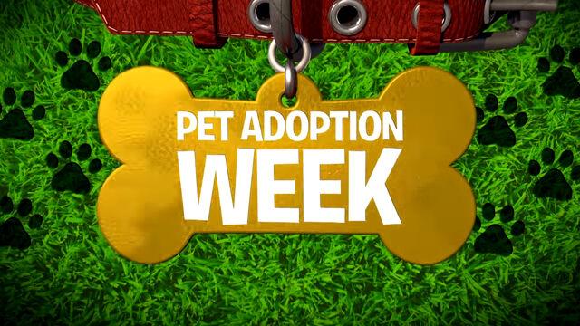 File:Pet Adoption Week.jpg