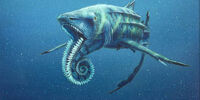 Helicoprion (PAS)