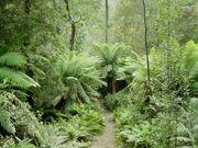 CretaceousRainforest
