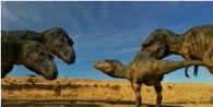 Daspletosaurus torrosus