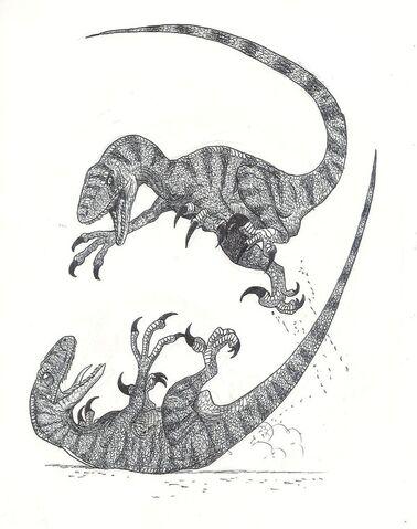File:Combattimento Tra Raptor.jpg