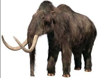 File:Woolly-mammoth.jpg