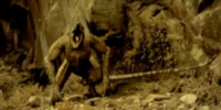 Tree Creeper (P:R)